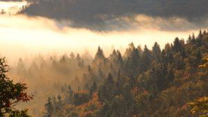 charismalook-bayerischen-wald-reise-urlaub-beitragsbild-natur